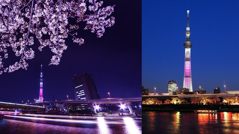 夜桜船 桜橋周遊コースのイメージ